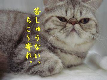 Cat_show_2