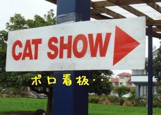 Cat_show_3