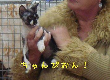 Cat_show_5