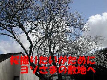 Photo_105