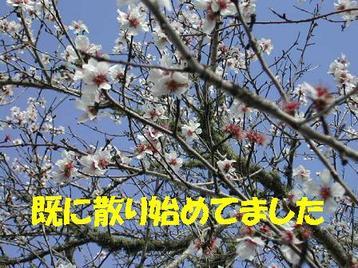 Photo_106