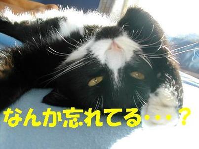 Photo_108