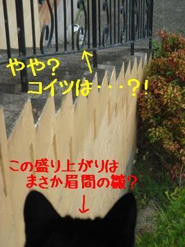 Photo_116