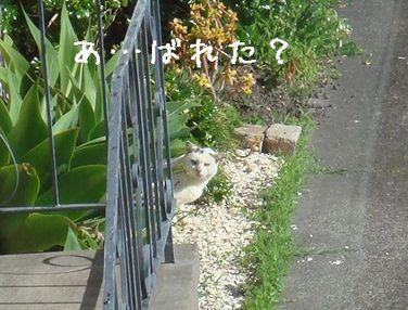 Photo_166