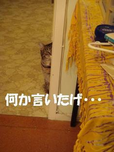 Photo_183