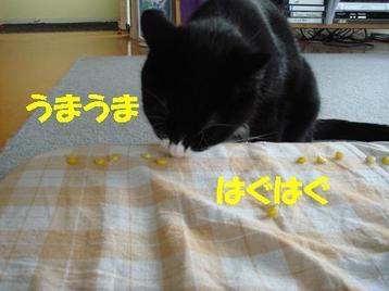 Photo_212