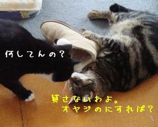 Photo_246