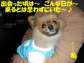 Photo_48